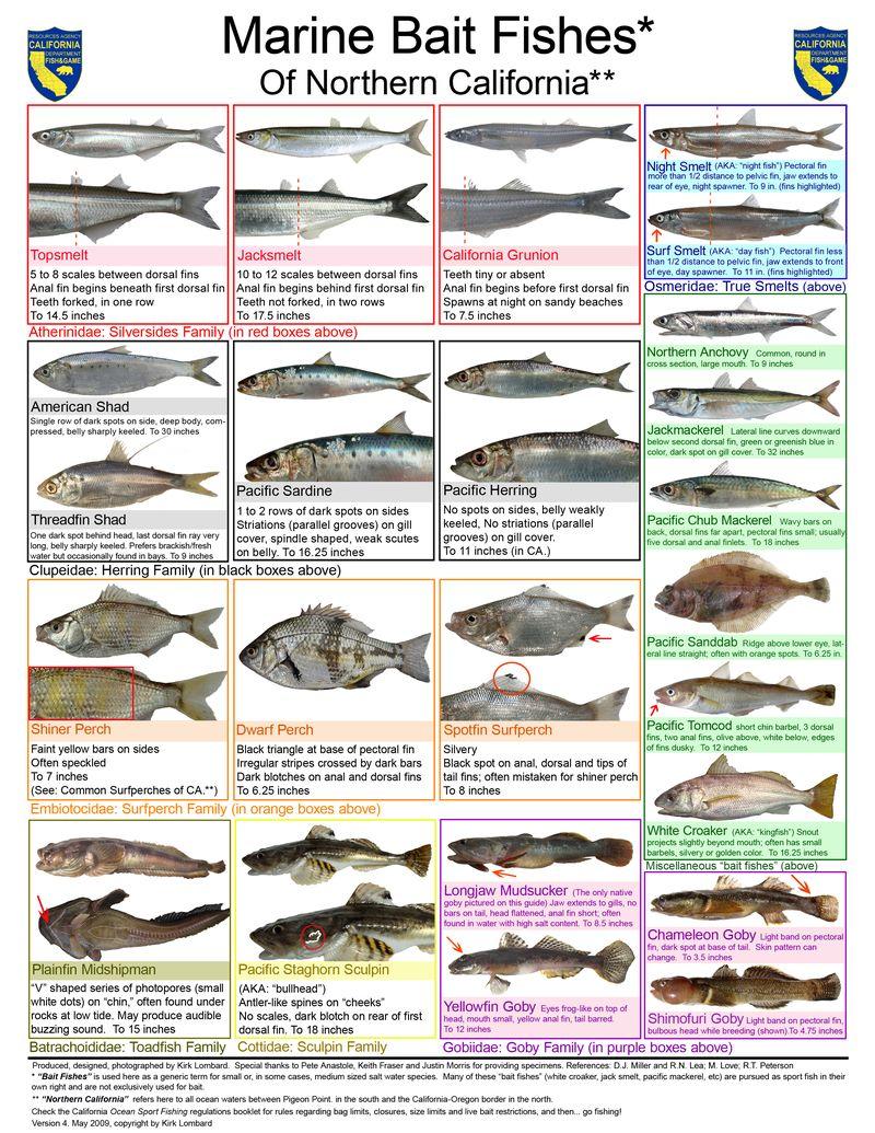 Marinebaitfish