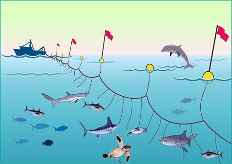 Longline-fishing1