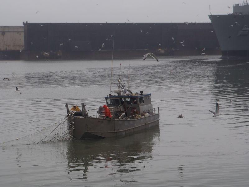 Herpaboat