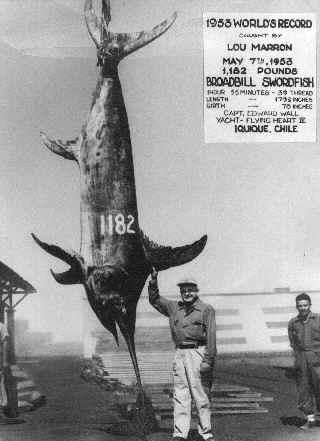 Swordfish-record