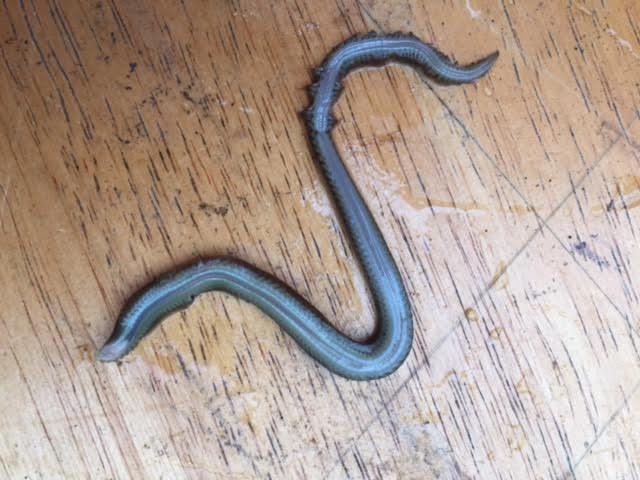 Sandworm1